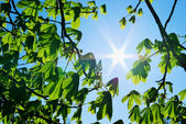 Branches of tree and sun — Stock Photo
