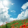 Hill of poppies - Stock Photo