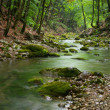 Royalty-Free Stock Photo: River deep in mountain forest