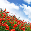 Poppies hill — Stock Photo #3225876