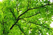 Thick foliage — Stock Photo