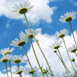 Daisywheels on sky background — Stockfoto