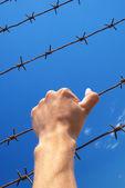 Mano de prisión — Foto de Stock