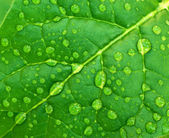 Dew on leaf — Stock Photo
