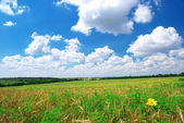 Agricultural meadow — Stock Photo