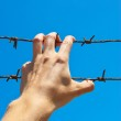 Hand of prison and sky background. — Stock Photo