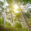 Royalty-Free Stock Photo: Sunlight in forest