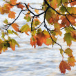 Maple leaves on a wind against water — Stock Photo