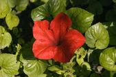 Flores vermelhas — Foto Stock