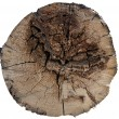Stock Photo: Old wood cut texture