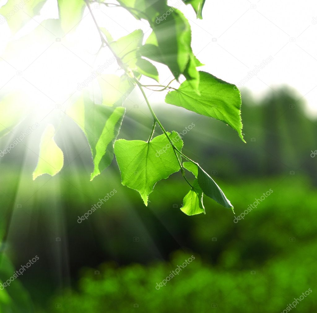 Sun beams and green leaves over bright background — Stock Photo #3173956