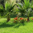 The green lawn — Stockfoto