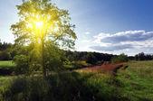 在一片草甸中单个大绿树 — 图库照片