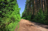 Rural road through the forest — Stockfoto