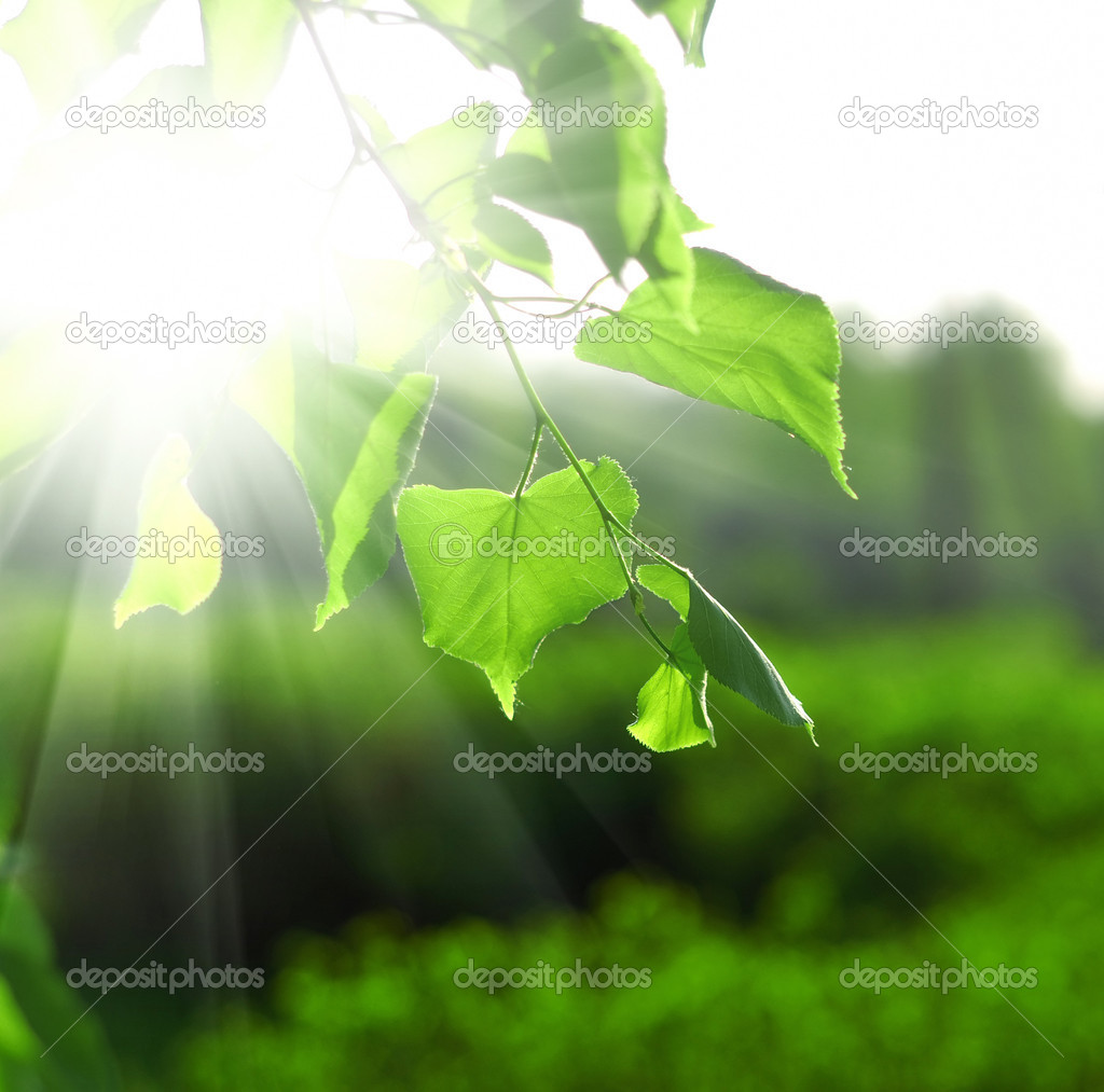 Sun beams and green leaves over bright background — Stock Photo #3625012