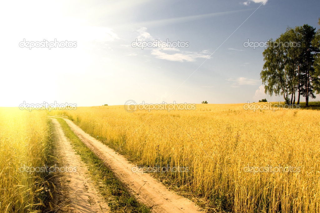 Field of grass  on background distant wood in sunset — Stock Photo #3636875