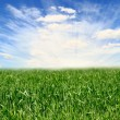 Field of green fresh grass under blue sky — Stock Photo #3469817