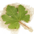 Grape leaf on a background burlap — Stock Photo
