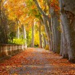 Fall in a Park — Stock Photo