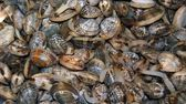 Heap of mollusks — Stock Photo