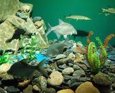 水族館 — ストック写真