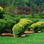 trädgård — Stockfoto #3084112