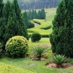 Сад — Стоковое фото #3130457