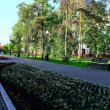 Irkutsk, Russia. Park. Summer. — Stock Photo #3357228
