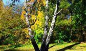 秋の森. — ストック写真