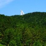 森林、 夏天 — 图库照片