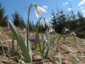 Spring in mountain — Stock Photo