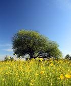 Strange tree and buttercups — Stock Photo