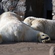 Polar bears family sleeping — Stock Photo #2883321