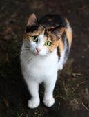 Looking cat — Stock Photo