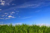 Grünes gras unter blauen himmel — Stockfoto