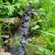 Small woodland stream — Stock Photo