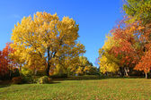 Landscape with trees in aurumn park — Stock Photo