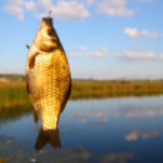 Catching crucian on lake background — Stock Photo