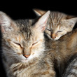 Stock Photo: Sleeping cats