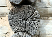 Gray wooden weathered timber — Stock Photo