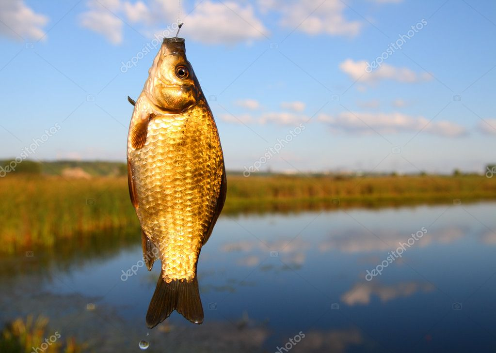 Fishing - catching crucian on lake background — Stock Photo #2941183