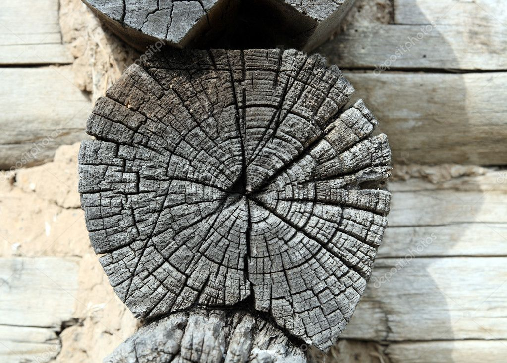 Gray wooden weathered timber in old felling  Stock Photo #2941791