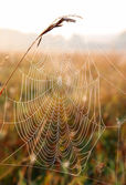 Spider web with dew drops — Stock Photo