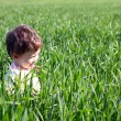 Baby in high green grass — Stock Photo