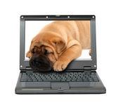 Laptop z uśpienia psa szczeniaka — Zdjęcie stockowe