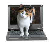 Small laptop with cat — Stock Photo