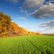 Autumn landscape with green field — Stock Photo #3560076