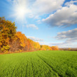 Autumn landscape with green field — Stock Photo #3635609