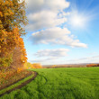 Autumn landscape with green field — Stock Photo #3676682