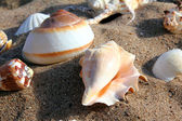 Seashells on sand — Stock Photo
